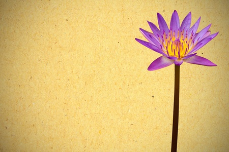 Violet lotus on yellow paper background photo