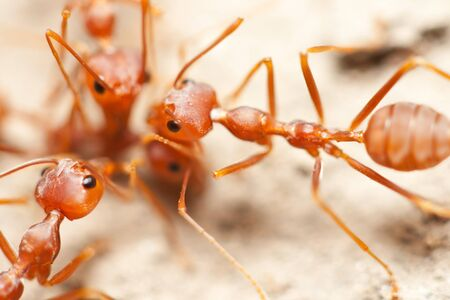 Group of ants photo