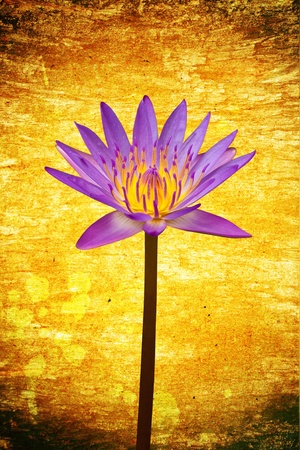 Beautiful lotus on grunge background photo
