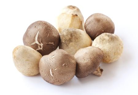 shitake: Straw and shitake mush room