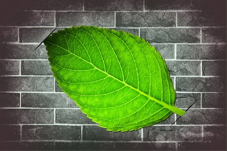 attach?: Hoja verde adjuntar el fondo grunge ladrillo pared