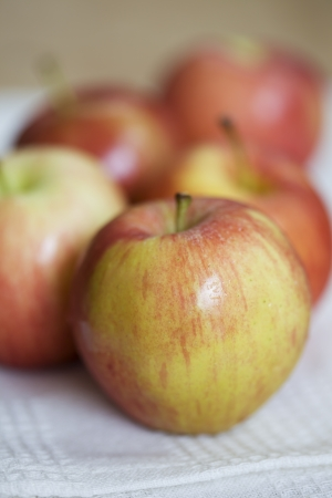 Fresh gala apple photo