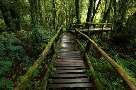 Green jungle in nature