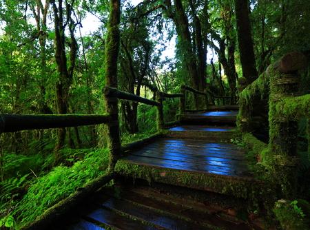 Green jungle in nature photo