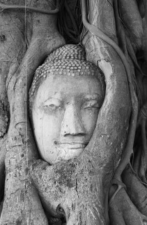 Buddha head in tree at Ayutthaya Thailand photo