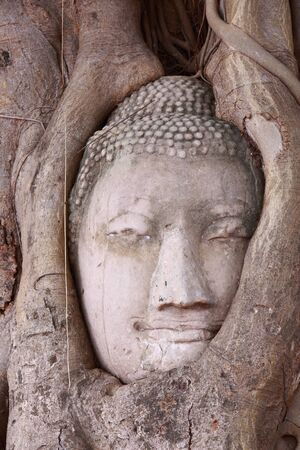 cabeza de buda: Cabeza de Buda en el árbol en Ayutthaya Tailandia