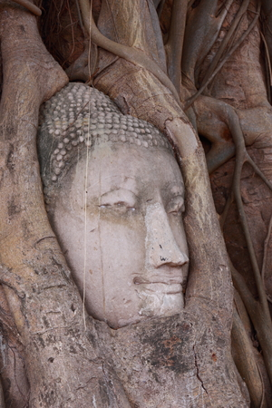 cabeza de buda: Cabeza de Buda en el �rbol en Ayutthaya Tailandia