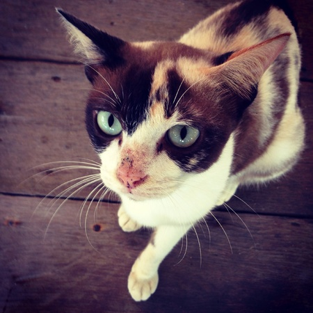 eye: The cat staring eyes