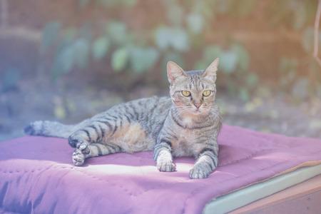 repose: Accommodation cats Repose