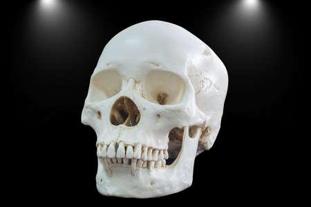 Skull of dark.
