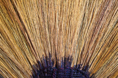 close up broom grass photo