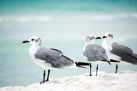 Pair of seagulls and lonely one aside on the seashore