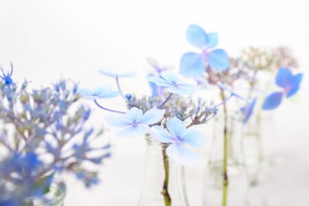 airy: Airy blue blossoms in transparent glass bottles