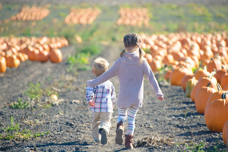 dashing: Its pumpkin time! Run to choose the best one!