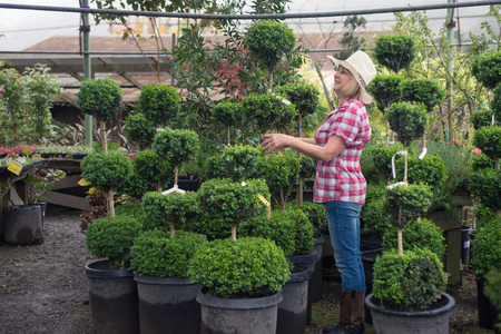 backyard woman: Woman in hat choosing plants in tree nursery for some landscaping project in her backyard Stock Photo