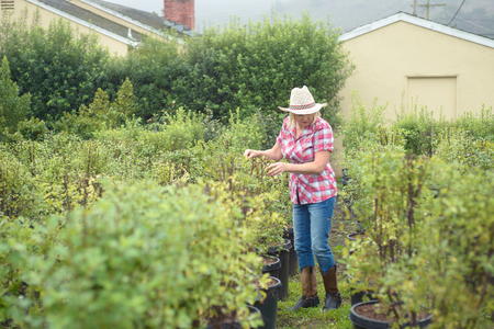 Woman choosing plants and trees at nursery