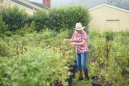 Woman choosing plants and trees at nursery