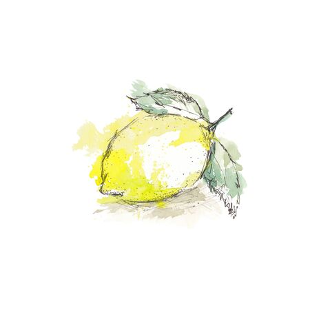 Watercolor sketch of isolated lemon