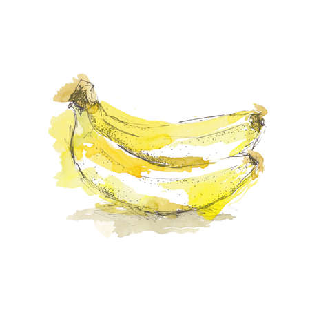 Watercolor sketch of isolated banana