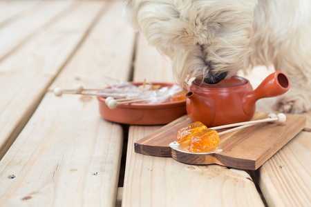 Candy lollipop and dog sniffing teapot on wooden background