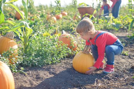 Little girl carrying pumpkin at field patch