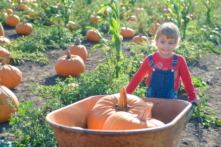 Little girl with wheelbarrow and pumpkins at farm field patch