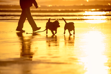 Dogs playing on the beach at sunset Stock Photo