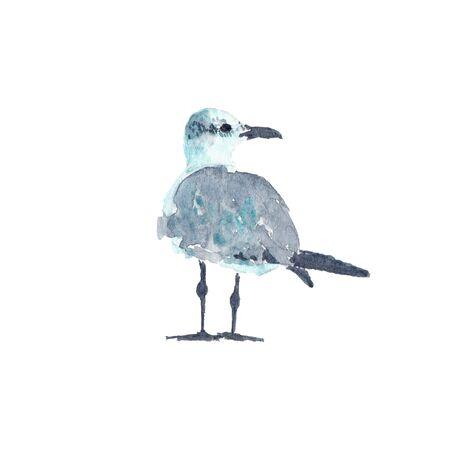 Watercolor illustration of seagull bird