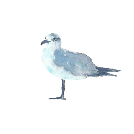 Watercolor illustration of seagull bird