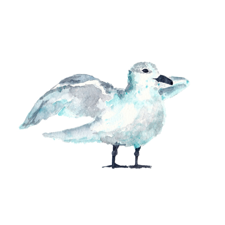 Watercolor illustration of seagull bird Foto de archivo - 101526698