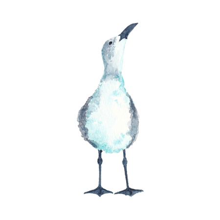 Watercolor illustration of seagull bird looking up Stok Fotoğraf