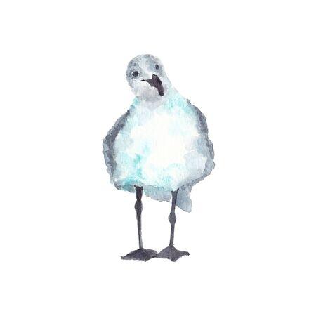 Watercolor illustration of staring seagull bird