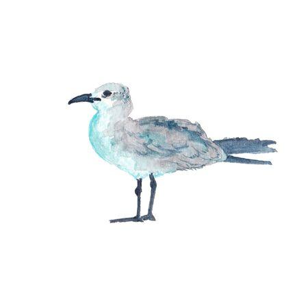 Watercolor illustration of seagull bird 版權商用圖片 - 98831397