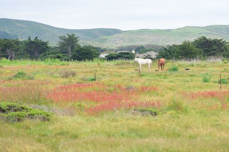 Horses grazing on green grass on private ranch Stock Photo