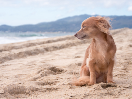 Cute dog looking at the ocean on the beach