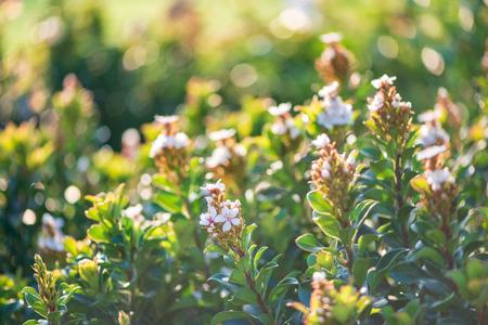 Beautiful flowers with blurred green background 版權商用圖片