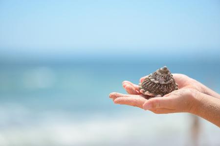 Child hands holding seashell Standard-Bild