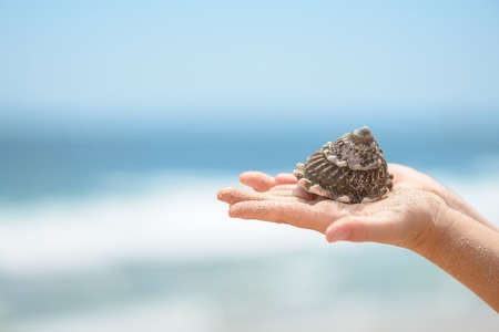 Child hands holding seashell 版權商用圖片