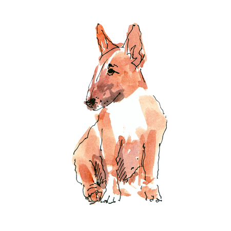 Watercolor illustration of pibull dog sketch isolated on white 版權商用圖片 - 109991146