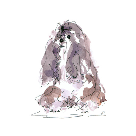 Watercolor illustration of maltese dog sketch isolated on white