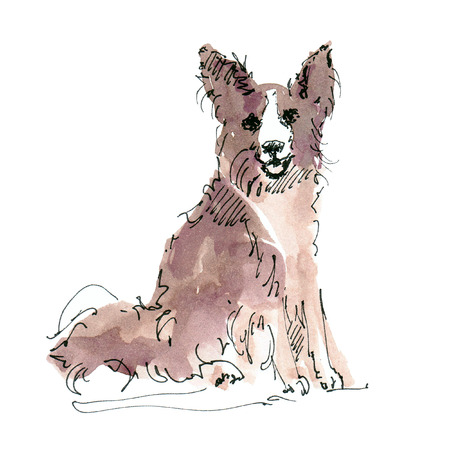 Watercolor illustration of Border Collie dog sketch isolated on white