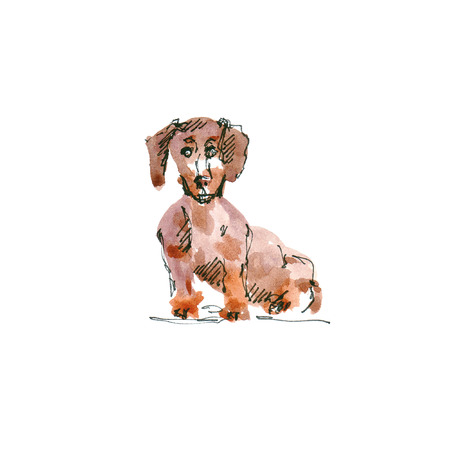 Watercolor illustration of dachshund dog drawing isolated on white 版權商用圖片