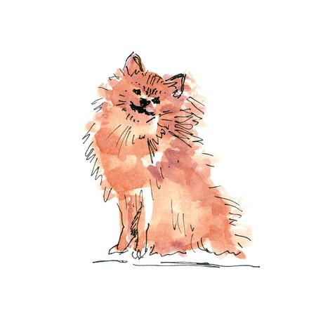 Watercolor illustration of Pomeranian Spitz dog drawing isolated on white