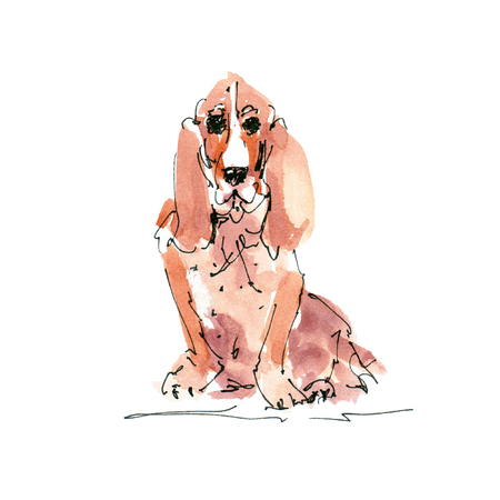 Watercolor illustration of Basset Hound dog sketch isolated on white