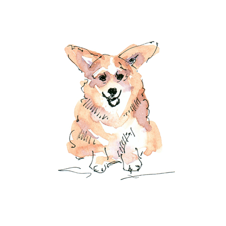 Watercolor illustration of Corgi dog sketch isolated on white 版權商用圖片