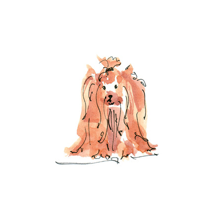 Watercolor illustration of Yorkshire Terrier dog Yorkie sketch isolated on white
