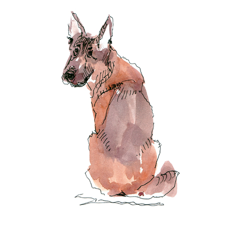 Watercolor illustration of German Shepherd dog drawing isolated on white