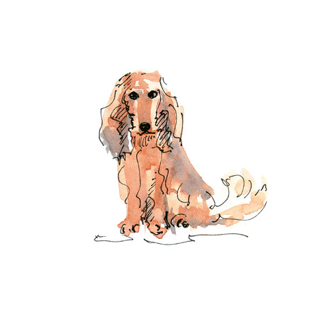 Watercolor illustration of Long-Haired Dachshund dog drawing isolated on white 写真素材 - 109991117
