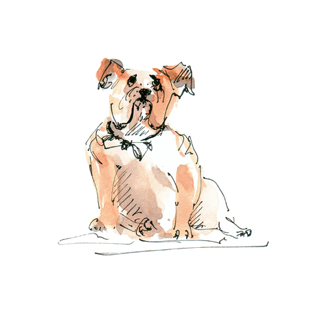 Watercolor illustration of Bulldog dog sketch isolated on white 版權商用圖片