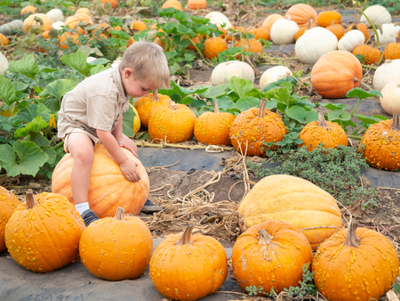 Little boy sitting on big pumpkin on farm patch